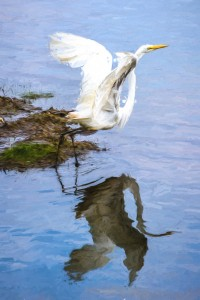 Egret_Away-Monet